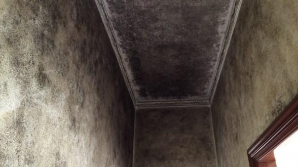Come eliminare la muffa dalle pareti del bagno torniamo - Come eliminare la muffa dalle pareti di casa ...