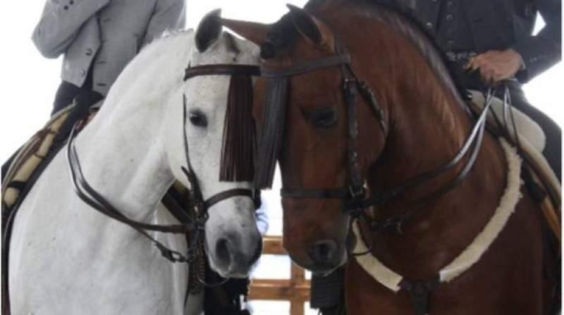 travagliato cavalli 2017