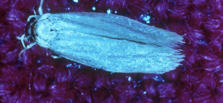 tarma-dei-tessuti