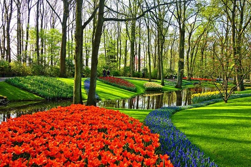attrezzi-manutenzione-giardino-di-casa_800x532